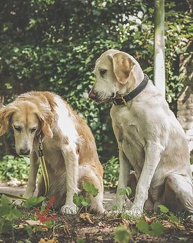Zwei Hunde beim Anti-Giftköder-Training