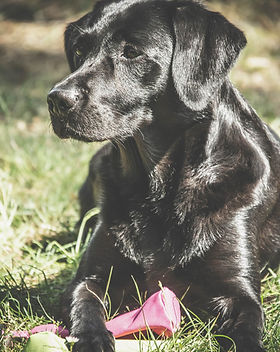 Grunderziehung Hundeschule in NRW