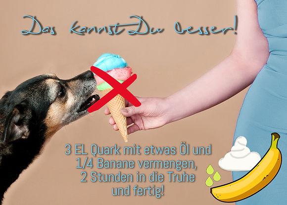 Hundeeis, Tipps von Hundetrainerin Carola Hentschel