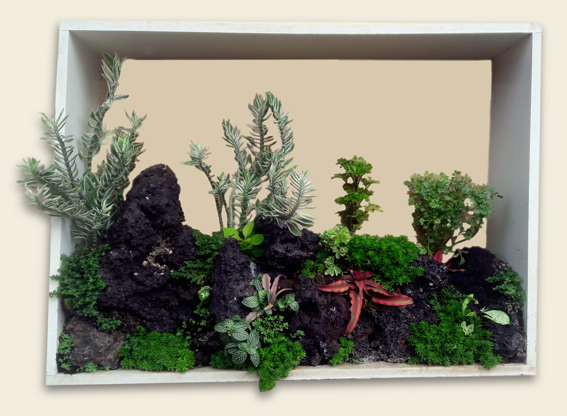Bonsai Wall Mural