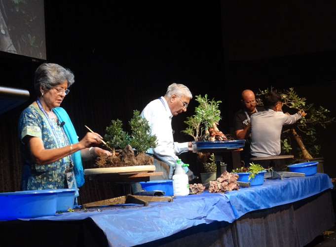 Bonsai Demo in Gold Coast, Australia