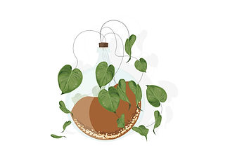 Plant in a glass pot.jpg