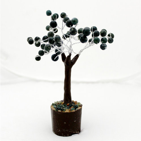 Green Jade Tree