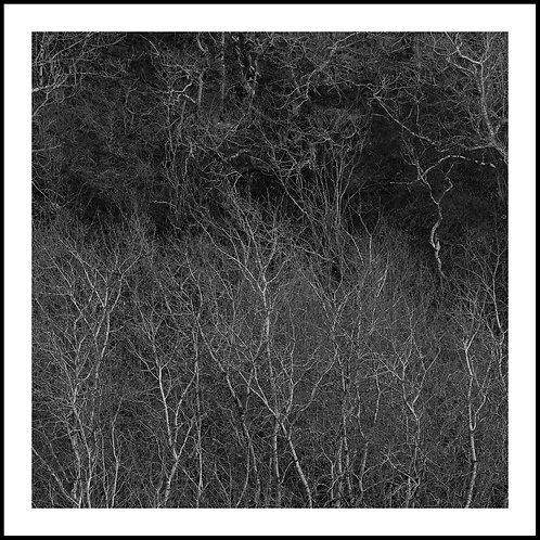 Talking Trees 13