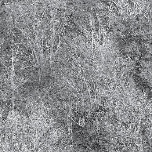 Talking Trees 2