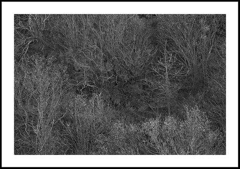 Talking Trees 3
