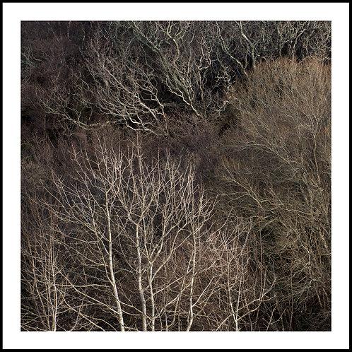 Talking Trees 12