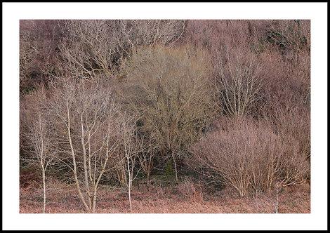 Talking Trees 4