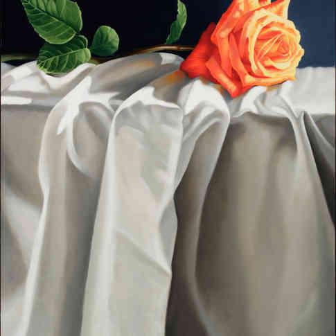 Orange Rose and Drapery