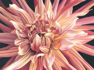 Dahlia Oil Painting   Inspiration For Painting