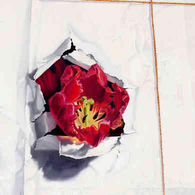 Tulip in White Paper