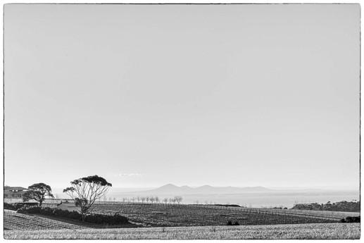Bellarine Landscape