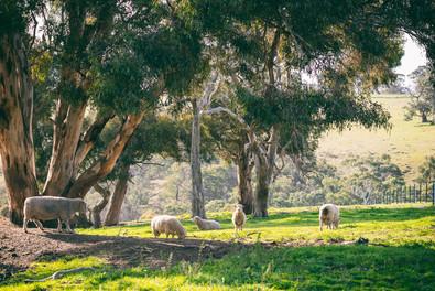 Moorabool Valley #4