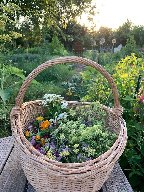 A basket of spring medicinal plants