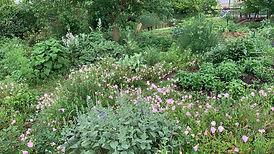 Forest Herb Garden