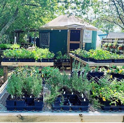 Garden Center Yurt