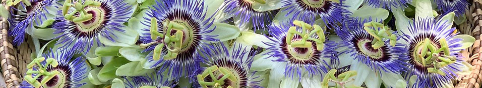 A basket of passion flowers