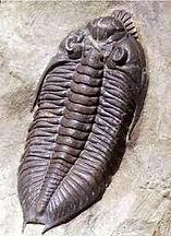 trilobite 1.jpg