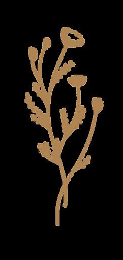 DLC-Floral1.png