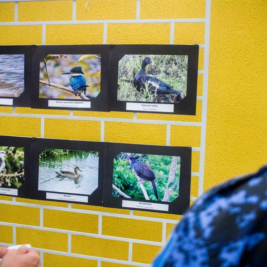 Exposição fotográfica com as espécies de aves registradas na propriedade onde será instalado o parque