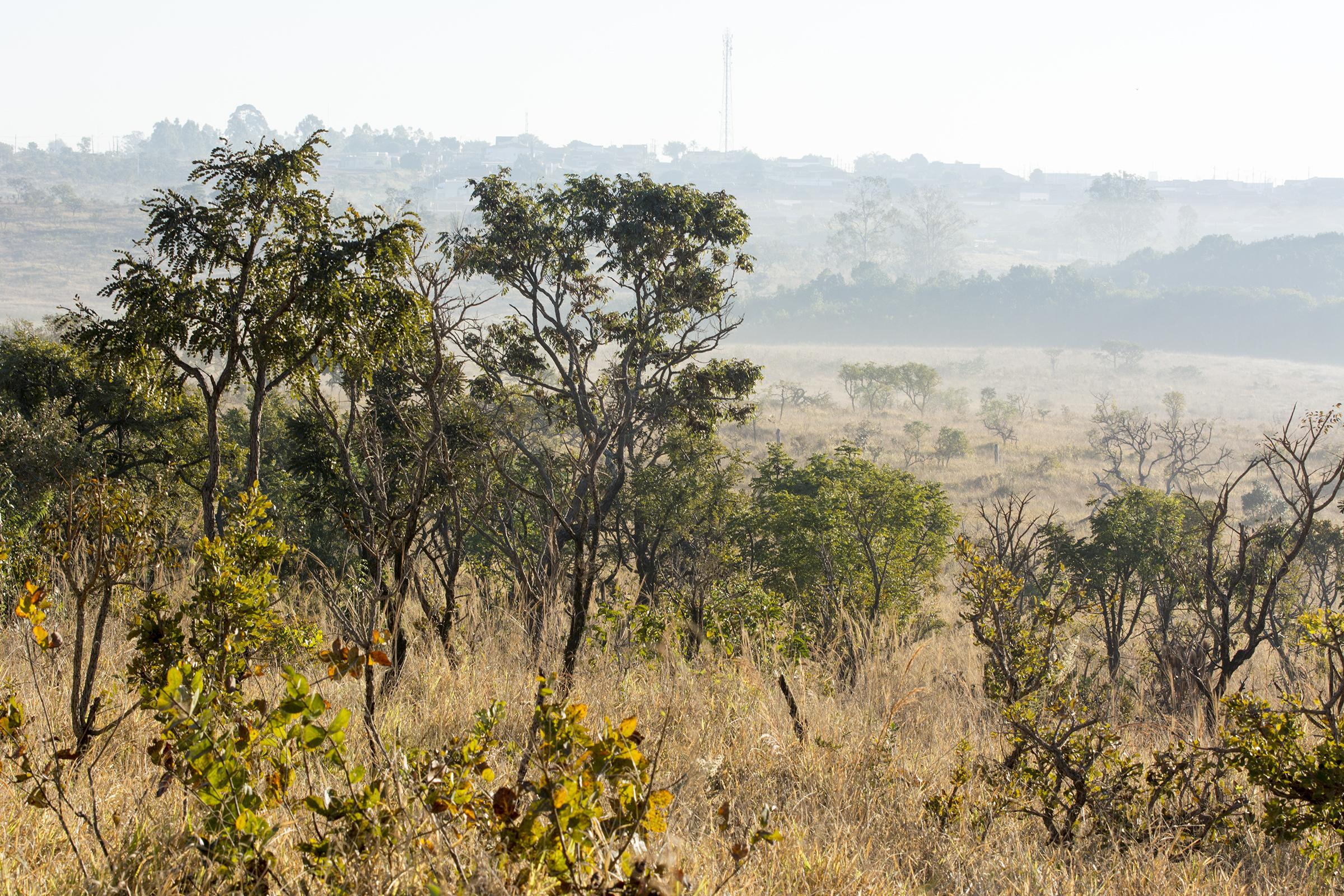 paisagem (7)