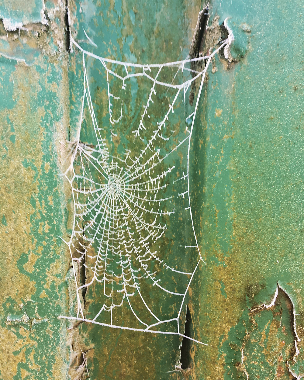 Ice spun lace spiders web