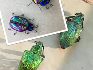 Beetle wings are beautiful things