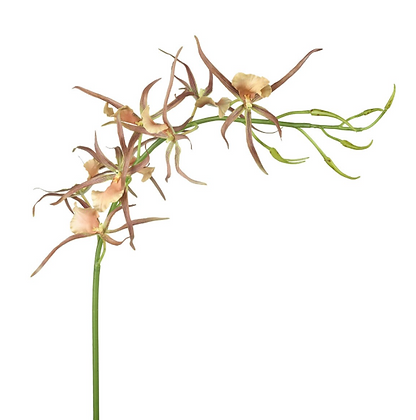 Faux Peachy Brown Spider Orchid Spray