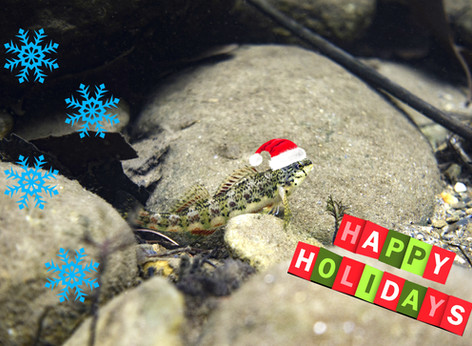 Happy Holidays to All of Our Friends and Supporters!