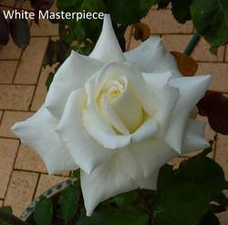 White Masterpiece