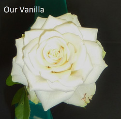 Our Vanilla