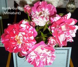 Hurdy Gurdy (Miniature)