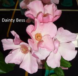 Dainty Bess