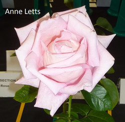 Anne Letts