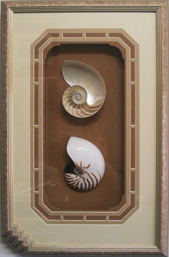 Framed_Nautilus_Shells_Decorative_Display