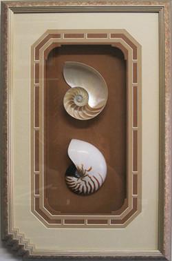 Framed_Nautilus_Shells_Decorative_Display