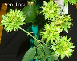 Verdiflora