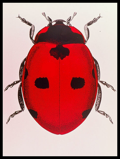 Documents insect-0012.jpg