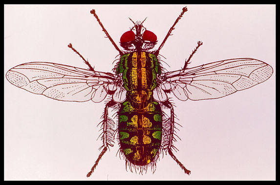 Documents insect-0014.jpg