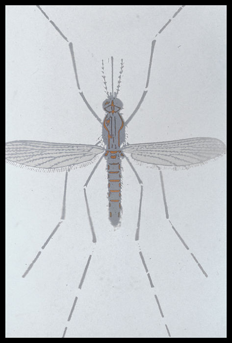Documents insect-0011.jpg
