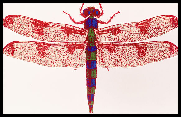 Documents insect-0016.jpg