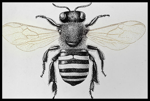 Documents insect-0015.jpg