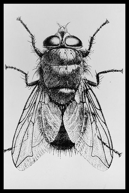 Documents insect-0001.jpg