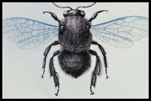Documents insect-0004.jpg
