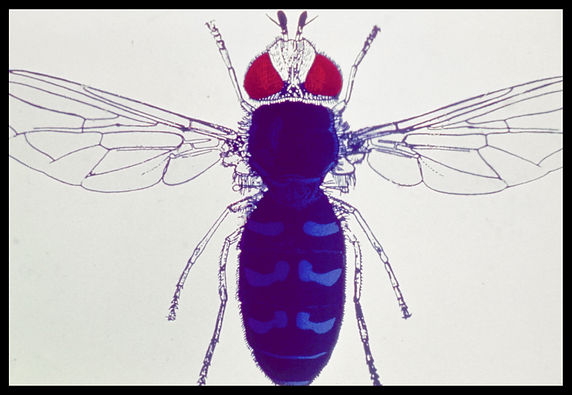Documents insect-0013.jpg
