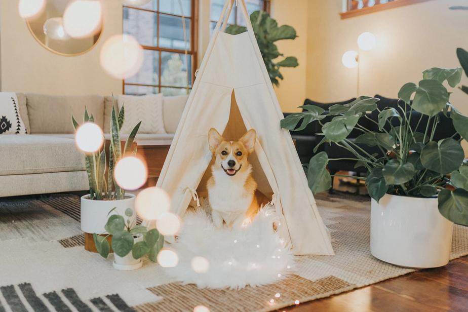 Perro en tienda de campaña con estilo navideño
