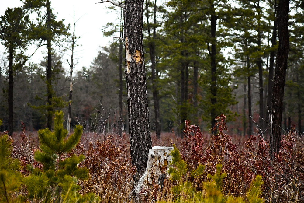 A field with some scattered trees, and a stump in the center