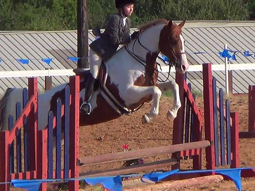 2 lessons/wk Lesson Horse