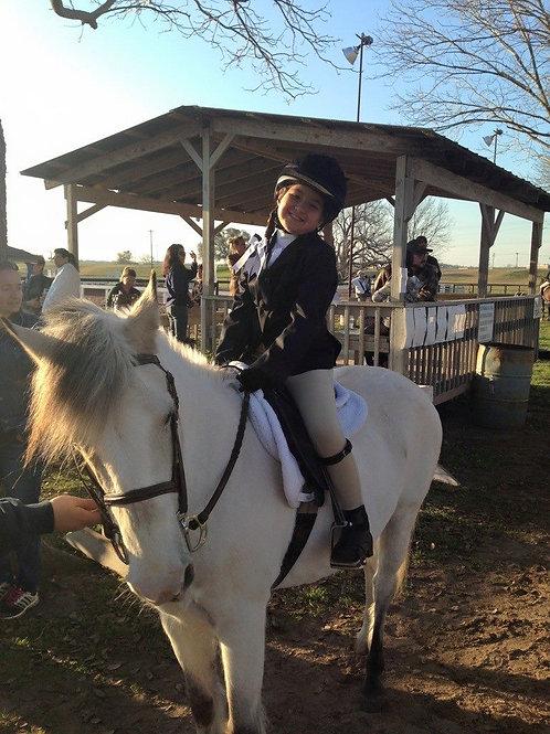 1 lesson Lesson Horse