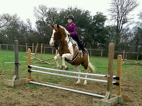 1 lesson/wk Lesson Horse